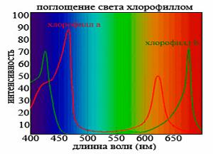 спектр света для рассады